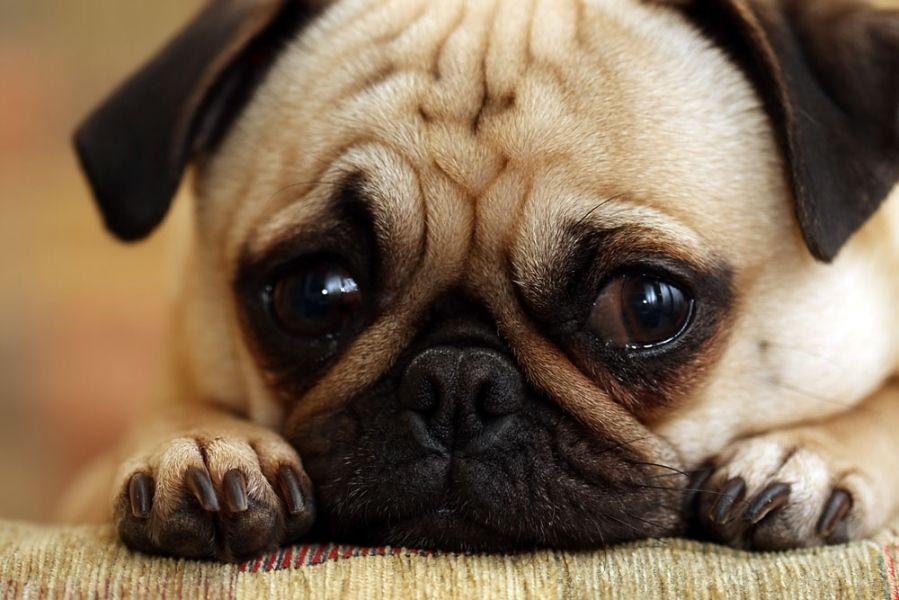 Ansiedade: 5 Métodos Naturais Para Acalmar Um Cão Ansioso